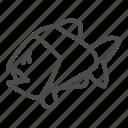 piranha, fish, animal, water, wild, danger, mammal