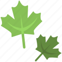 beautiful shape, fresh leaves, green leaves, leaves, leaves icon icon