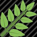 fresh leaves, green leaves, green stem, leaves, stem icon
