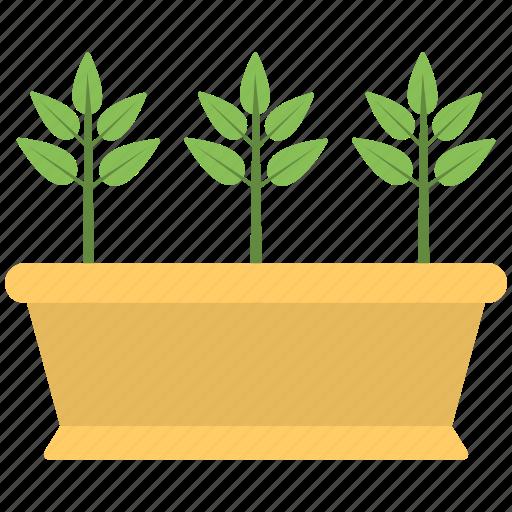 brown pot, green plant, plant, planting, pot icon