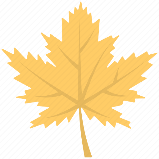 autumn leaves, beautiful shape, leaves, plants, yellow leaves icon
