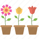colorful flowers, flower pot, flowers, pot, three pots icon