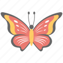 beautiful fly, butterfly, colorful, creature, insect icon