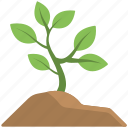 baby plant, garden plants, mini plant, plant, soil icon