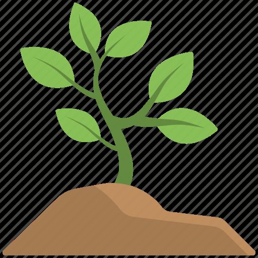 baby plant, garden plants, mini plant, plant, soil icon