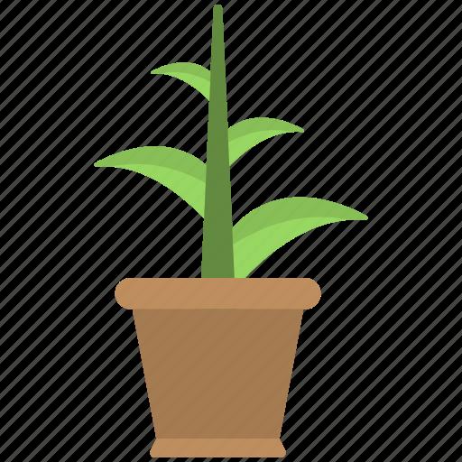 brown pot, new plant, plant, planting, pot icon