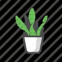 decorative, plant, mothers in law tongue plant, nature, potplant, houseplant, sansevieria