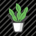 houseplant, nature, plant, pot, sansevieria, snake plant, trifasciata icon