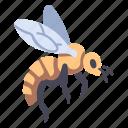 bee, garden, honey, insect, nature