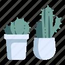 cactus, decoration, garden, plant, pot, thorn