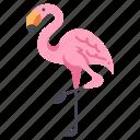 animal, bird, decoration, flamingo, garden, nature