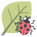 environment, insect, ladybug, leaf, nature icon