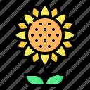 sunflower, flower, blossom, summer, spring