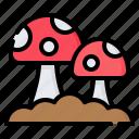 mushroom, fungi, vegan, vegetarian, vegetable