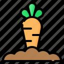carrot, vegetable, gardening, farm, harvest