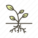 plant, root, roots icon
