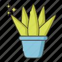 aloe, plant, succulent, vera