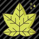 autumn, leaf, leaves, nature