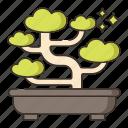 bonsai, nature, plant, tree