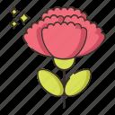 carnation, flower, nature, plant
