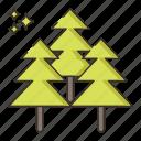 fir, forest, tree, wood