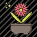 creative, design, floral, nature