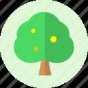 fruit, nature, tree icon
