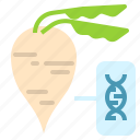 engineering, genetic, gmo, plant, sugarbeet icon