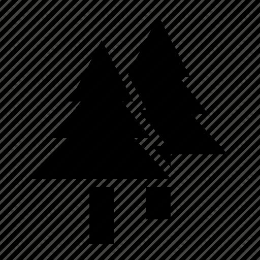 christmas, pine, pinus, plant, tree icon