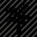 arecaceae, coco, coconut, palm, tropical icon