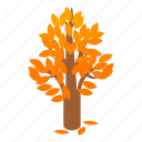 autumn, branch, isometric, leaf, nature, plant, tree icon