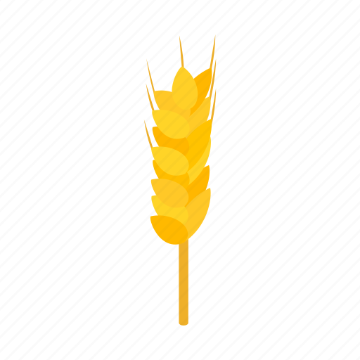agriculture, bread, food, grain, isometric, seed, wheat icon
