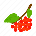 berry, fruit, hawthorn, isometric, leaf, nature, red icon