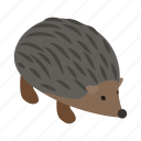animal, hedgehog, isometric, mammal, prickly, wild, wildlife icon