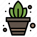 gardening, plant, potted