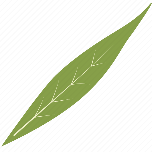 green, leaf, leaves, nature, tree, tropical icon
