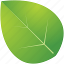 green, leaf, leaves, nature, spring, tree icon