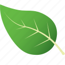 green, leaf, leaves, nature, tree, tropical