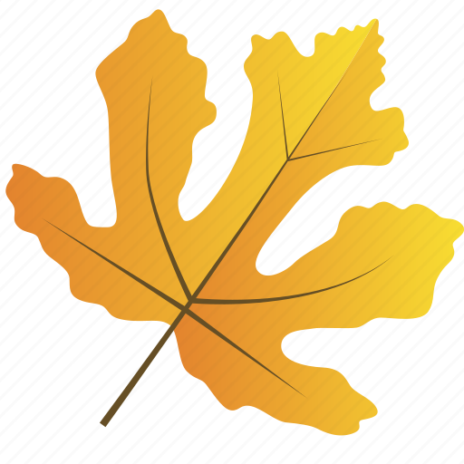 leaf, leaves, maple, mulberry, natural, nature, tree icon