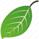 leaf, leaves, maple, mint, nature, tree icon