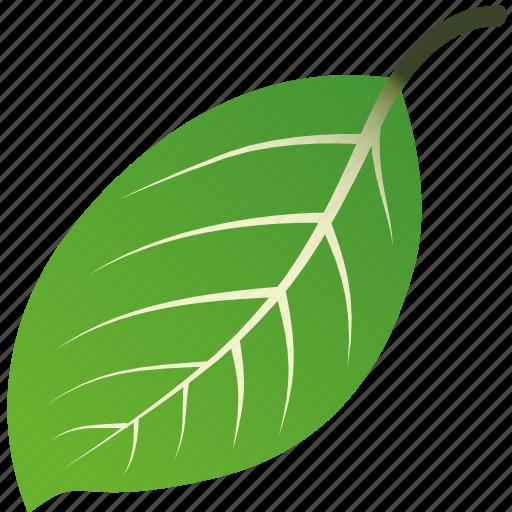 leaf, leaves, maple, mint, nature, tree icon