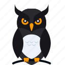 animal, bird, dark, halloween, night, owl, scary