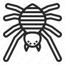 arachonophobia, bug, halloween, horror, insects, spider icon