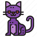 cat, spooky, halloween, animal, pet