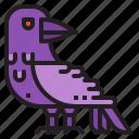 horror, bird, halloween, raven, animal