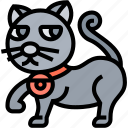 cat, animal, kitten, halloween, mystery