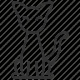animal, black cat, cat, halloween, monster, night, pet icon
