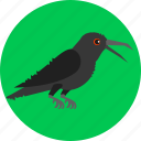 bird, corvus, crow, fly, rook, scarecrow icon