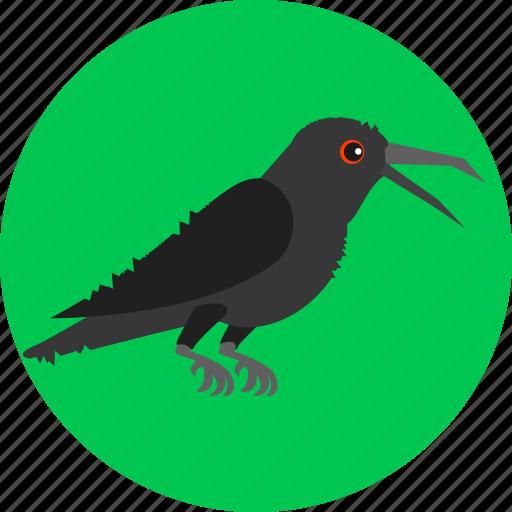 bird, corvus, crow, fly, rook, scarecrow icon