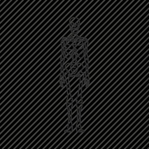 bones, dead person, halloween, human skeleton, skeleton icon